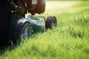 entretien-pelouse
